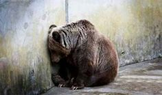 """Ricky Gervais shared the image of this suffering captive bear along with the caption: """"Bullfighting. Enslaving dolphins. Skinning dogs alive. Bile farming. We certainly are the cruelest animal on Earth."""""""