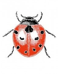 """'Notelets', for smaller sized cards """"Ladybird"""""""