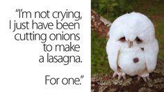 The saddest owl ever.