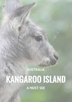 Kangaroo Island - Australia || Amazing must see island located 45 minutes from Cape Jervis. The Islands in filled with amazing nature parks, unique landmarks and lots and lots of Australian wildlife      Details are on the blog.