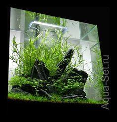 Create the aquarium Fluval Edge 2 by Oliver Knott Mini Aquarium, Glass Aquarium, Aquarium Design, Reef Aquarium, Aquarium Fish Tank, Planted Aquarium, Fish Tanks, Nano Cube, Fen Shui