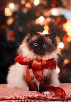 Santa's little helper by *Thunderi on deviantART