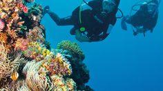 Turtle Bay, Dark Reef, Great Barrier Reef, QLD. © Tourism Queensland