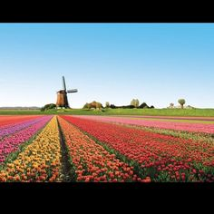 Netherlands...oh how I hope it looks like this when we're there next summer!