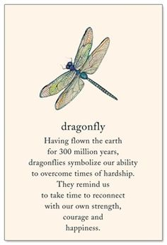 Dragonfly Support & Encouragement Card - Gardening For Life Great Quotes, Quotes To Live By, Me Quotes, Inspirational Quotes, Yoga Quotes, Girl Quotes, Dragonfly Quotes, Dragonfly Art, Dragonfly Symbolism