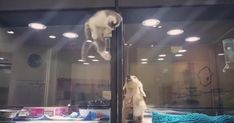 Kitten escapes pet store display to play with puppy - pet store, puppy, cute pet Videos, adorable Kitten Videos Pet Store Puppies, Tiny Puppies, Kittens And Puppies, Cute Puppies, Cats And Kittens, Dog Best Friend, Dog Friends, Best Friends, Cute Kittens