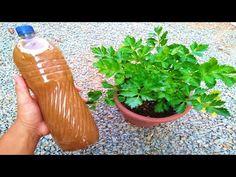 Esse adubo faz qualquer planta decolar em 48 horas (Força, brilho e destrói folhas amarelas) - YouTube Diy Home Crafts, Creative Crafts, Event Planning, Make It Yourself, Cactus, Asa Delta, Gardening, Blog, Small Vegetable Gardens