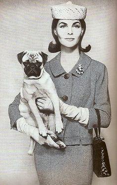 Pug with fabulous vintage fashion.