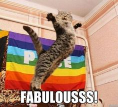 This cat is ready for Pride :]