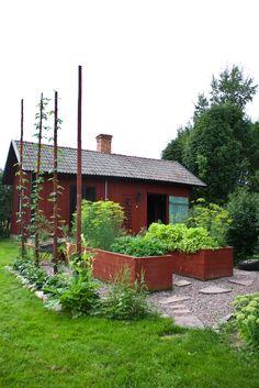 Köksträdgård. Planteringslådor som är fyllda med kryddor, sallad och dill. Längs med störarna växer det humle och nedanför växer jordgubbs plantor.