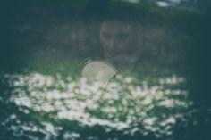 Un matrimonio in una bella Villa a pochi chilometri da Milano. Un fredda giornata invernale accesa dai colori e dall'entusiasmo di Sara e Simone. Per questo matrimonio ho voluto dare alle fotografie un effetto vintage - pur mantenendo uno stile reportage e senza pose - in modo da togliere il tempo alla Fotografia. Le fotografie sembrano ottenute da vecchie lastre vintage evidenziate da colori tenui e leggermente desaturati. Il matrimonio è stato particolare anche per la totale assenza di…