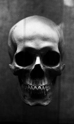 Fotografía de Youichi Shidomoto | Skull | Pinterest     #skull #humanskull