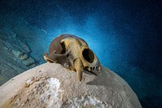 The well-preserved remains offer a glimpse into the rapidly shifting world that surrounded Naia, a girl who died around 13,000 years ago.
