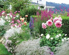 Combinations of bushy dahlias and airy spires give height, while bushy plants fill in below.