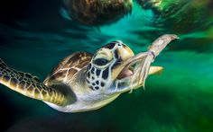 Photograph Squid vs Sea Turtle by Christian Miller on 500px