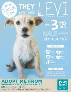 "ADOPT LEVI : This fun, smart post tells you everything you need to know. Make smart marketing your new ""adoption floor"". Well done HSSV!"