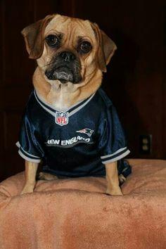 26 Best New England Patriots Pets images  005b7d844