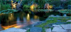 Pond Lighting  #pondlighting