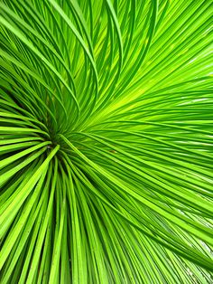 """Le Vert à Rungis : Le Xanthorrhoea, ou """"Grass Tree"""" Go Green, Green Colors, Colours, Green Grass, Bright Green, World Of Color, Color Of Life, Vert Turquoise, Shades Of Green"""