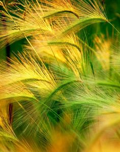 ~My Green & Yellow World~