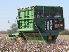 Mississippi Delta cotton picking
