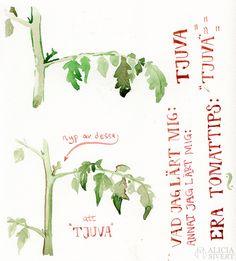 """""""Tjuva tomatplantor"""", water colour by Alicia Sivertsson."""