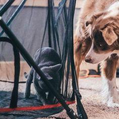 Pumpkin Dog Treats for the Fall Season   Carlson Pet Products Dog Treat Recipes, Healthy Dog Treats, Dog Food Recipes, Cat Care Tips, Pet Care, Pet Tips, Pvc Dog Bed, Dog Cots, Pumpkin Dog Treats
