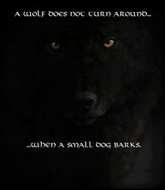 A wolf does not turn around when a small dog barks.