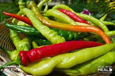Lák na kozí rohy Pesto, Pickles, Food And Drink, Stuffed Peppers, Meals, Vegetables, Red Peppers, Meal, Stuffed Pepper