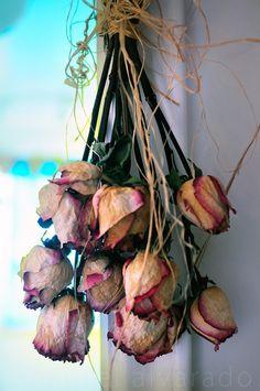 . . . . Rosebuds . . . .