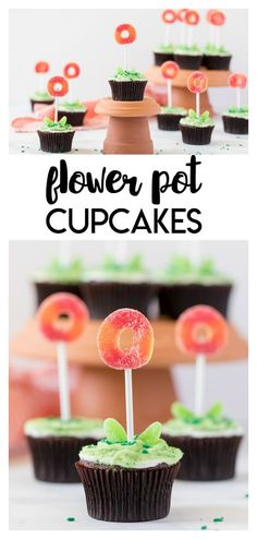 Flower Pot Cupcakes: an edible flower pot cupcake that is simple to make and fun for the kids! Cupcakes icing and candy. Pot Cupcake, Cupcake Flower Pots, Flower Pot Cake, Cupcake Recipes, Dessert Recipes, Vegan Kitchen, Kitchen Recipes, Cupcakes, Cupcake Cakes
