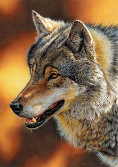 Wolf Portrait by EsthervanHulsen.deviantart.com on @DeviantArt