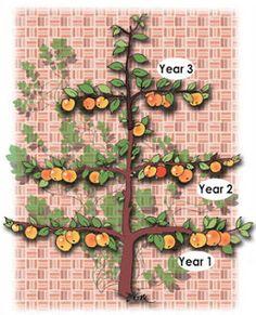 Espaliered Apple Trees