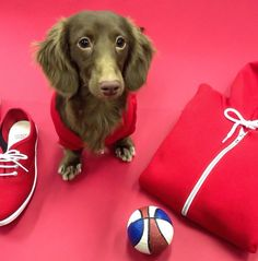 Choco in sporty red.