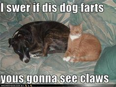 funny dog pictures - I swer if dis dog farts  yous gonna see claws