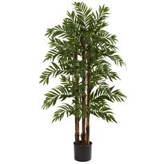 4Ft Parlour Palm Tree