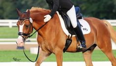 Using and Applying Your Natural Aids in the Saddle