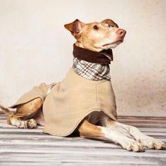 Kensington, Dog Coats, Pitbulls, Dogs, Animals, Pets, Greyhounds, Dog Accessories, Dog Breeds