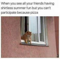 When You See All Your Friends Having Shirtless Summer Fun But You Can't Participate Because Pizza - Funny Memes. The Funniest Memes worldwide for Birthdays, School, Cats, and Dank Memes - Meme Funny Animal Memes, Funny Animal Pictures, Cat Memes, Funny Cats, Funny Animals, Funny Memes, Animal Humor, Funny Quotes, Cats Humor