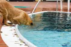 #Hunde #Ratgeber #Sommer #Hitze http://www.kaltwetter.com/kuehltipps-fuer-hunde/