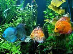 Výsledek obrázku pro foto barevné mořské ryby