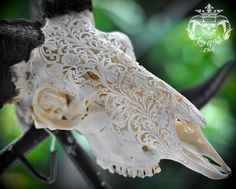 Hand Carved Ram Skull with Horn Filigree Flower Great Taxidermy Oddities For Home Decor