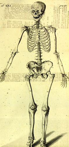 or a new system of anatomy describing the animal oeconomy, and a short treatise of many distempers incident to human. Male Face Drawing, Figure Drawing Books, Male Figure, Old Books, Human Anatomy, Cool Drawings, 18th Century, Drake, Cover