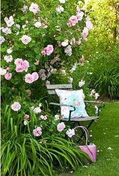 Good temporary seating idea - just move a small chair with a coordinating pillow near the rose bush while it is in bloom.