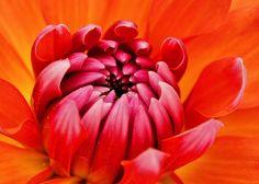 Pink & Orange by sea turtle, via Flickr