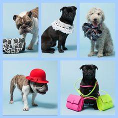 The fabulous life!  #dogs #fashion