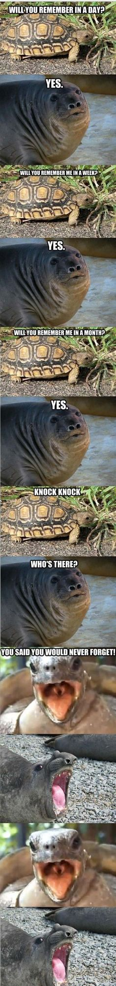 funny animals pictures with captions (56 pict) | Funny Pictures: