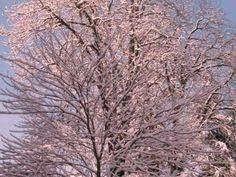 Der Winter,  Vivaldi,Vier Jahreszeiten