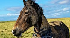 15 Horses Who Love Mud a Little Too Much