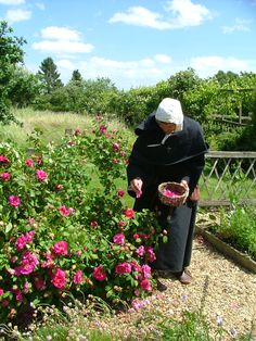 Image result for orthodox monk picking herbs